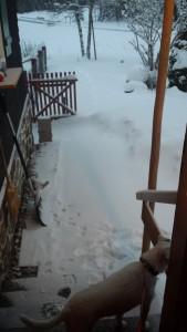 Hanabi wirft einen skeptischen Blick vor dem Morgenspaziergang auf den Schnee