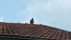 Wachvogel 2