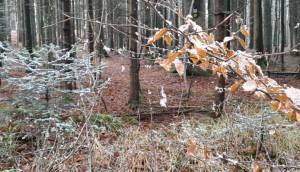 Die wenigen Schneeflocken bleiben an den Spinnenfäden hängen