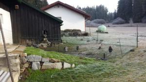 Hühner im Außengehege