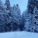 Nach dem Morgenspaziergang - Winterlandschaft