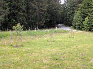 Nur einer von drei Bäumen ist sichtlich gewachsen